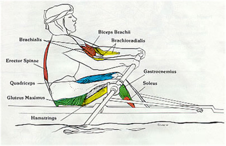Rowing - arms pull through emphasis